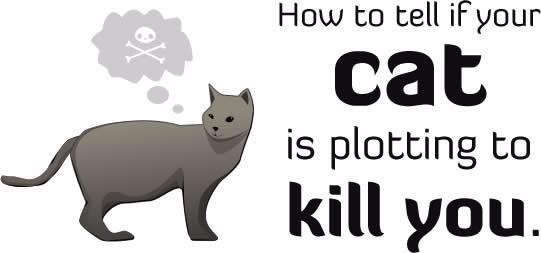 She Wants Me Dead - joc pentru pisicile care își urăsc stăpânii platformer cats